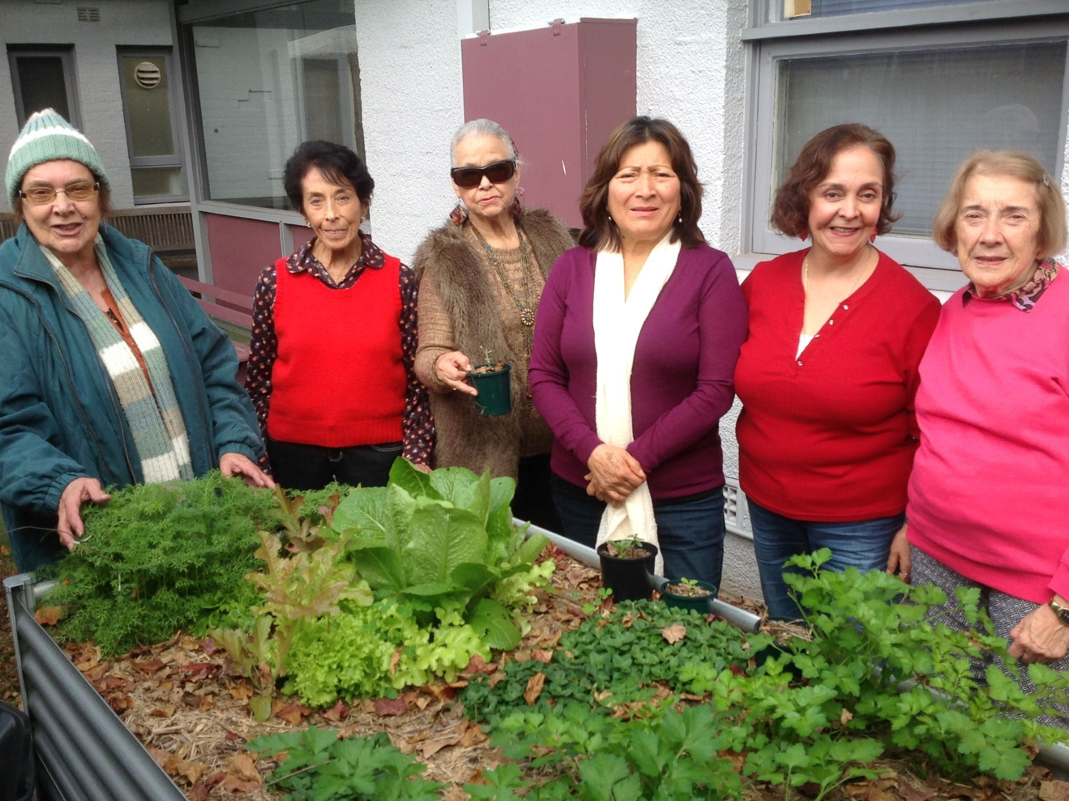 Sydney Community Foundation, Sydney Women's Fund, Gymea Community Aid, Gymea Community Garden, Community Garden Sutherland Shire, CSR Sydney, Harmony week sydney